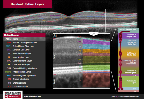 Download Handout Retinal Layers